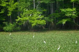 William Bailey Travel Visits A Top Florida Travel Destination
